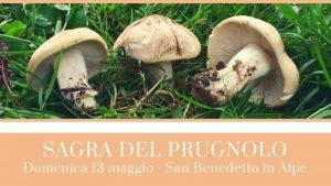 Sagra del Prugnolo a San Benedetto in Alpe