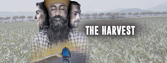 THE-HARVEST_ORIZZONTALE