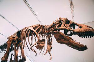 XVIII Edizione delle Giornate di Paleontologia