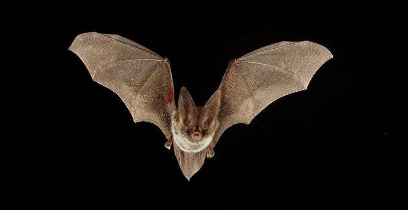 Bat Night - Ma che bello il pipistrello