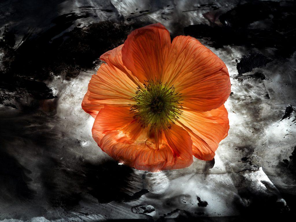 Amata bellezza, fiori e visioni - Mostra personale di Mario Carrieri