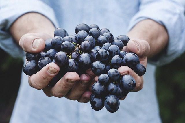Sagra dell'uva Quagliano