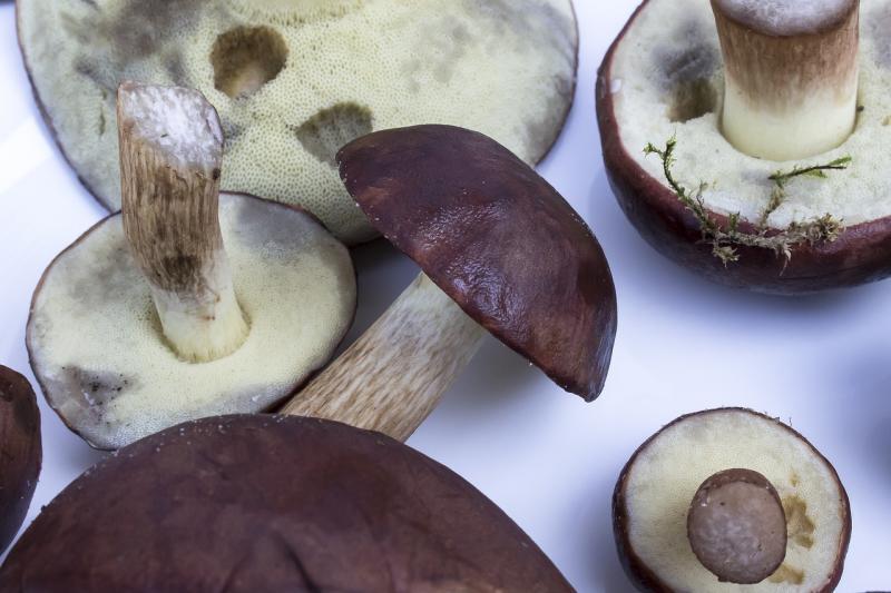 16° Sagra dei Funghi