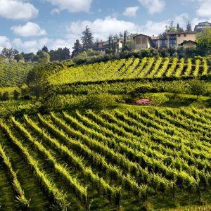 Andar per Vigne - Cantina Il Cipresso