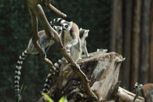 A Passeggio con Darwin - Darwin Day 2019
