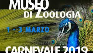 Speciale Carnevale al Museo Civico di Zoologia