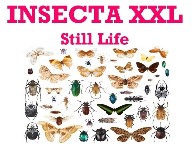 INSECTA XXL - Still Life