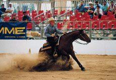 Cavalli a Reggio - 3° edizione