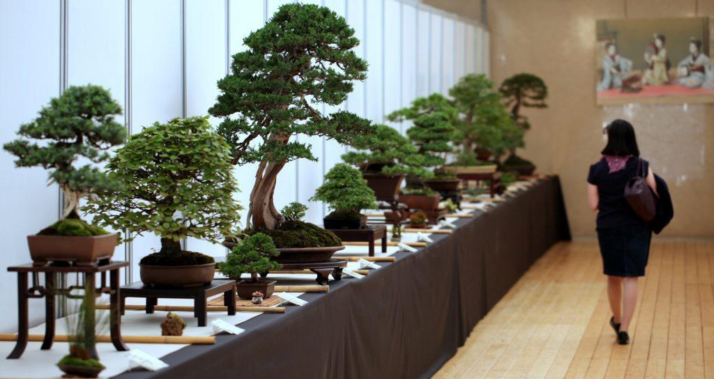 Raduno Internazionale Bonsai e Suiseki - 13° edizione