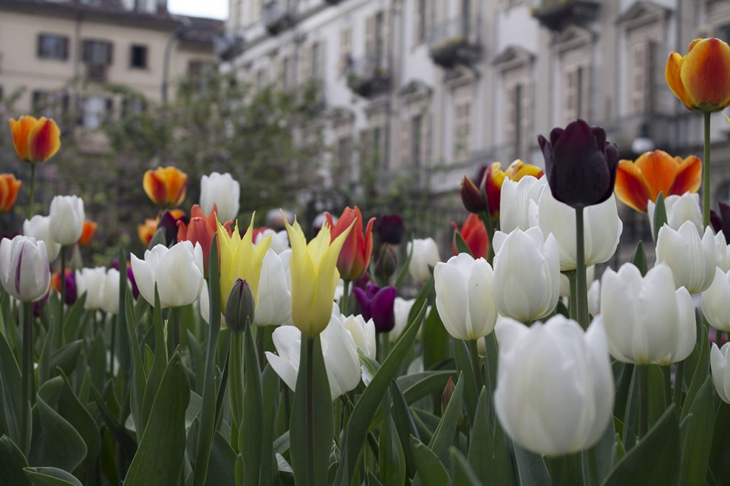 Messer Tulipano - 21° edizione
