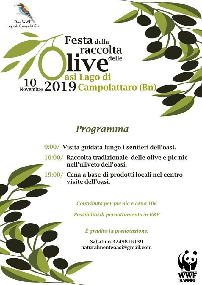 Festa della Raccolta delle Olive